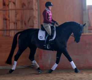Summer and young horse, Anastacia working with Christian Garweg